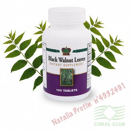 «Листья черного ореха - Black Walnut Leaves»
