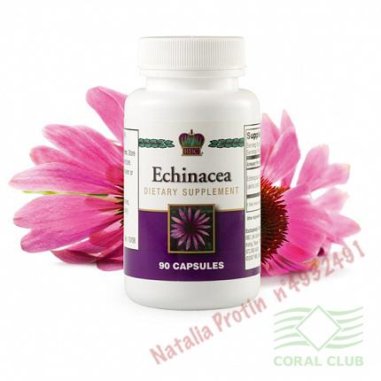 «Эхинацея - Echinacea»